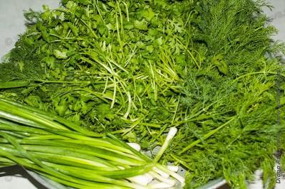 мытая зелень кинзы, укропа и зеленого лука