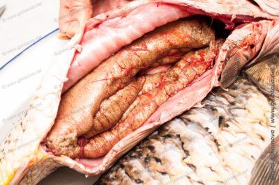 свежая рыба сазан