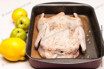маринованная утка, яблоки и айва